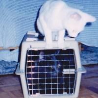 how to discipline your cat