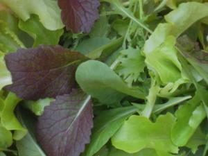 salad5109-004