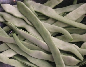 Marvel of Venice pole bean before turning yellow