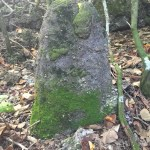 Ancient Chamorro Village Rediscovered, Found In Guam