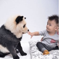 Small Crop Of Dog That Looks Like A Bear
