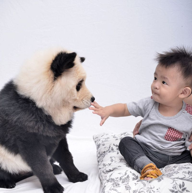 Large Of Dog That Looks Like A Bear