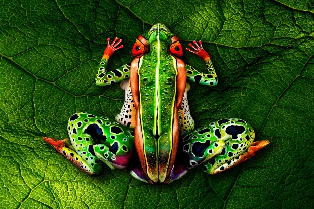 Frog: Stötter put his talent to good work again when he created this stunning frog in the rain forest. One of his more ambitious projects, he used five models.