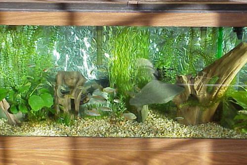 Fish tank decorations 70 gallon top fin 75 gallon hooded for Fish tank decorations amazon