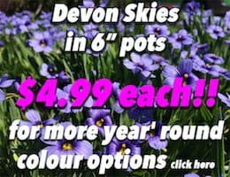 Devon Skies Button Pic