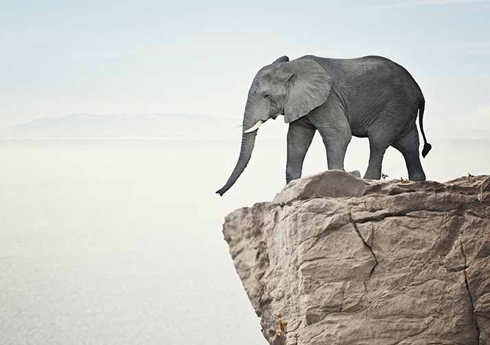 Elephants in Denmark? Why Your Business Should Care