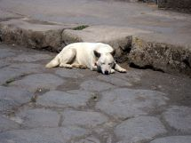 A Modern Dog in Pompeii