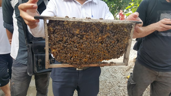 Bees at the bee farm on the Mekong Delta