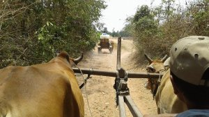 Riding by ox cart to a remote village. Transportation is all part of a culture's exploration!