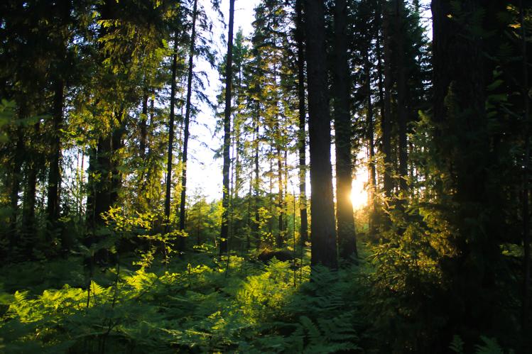Storfinnhova Forest Village The Wanderlust Bug 7