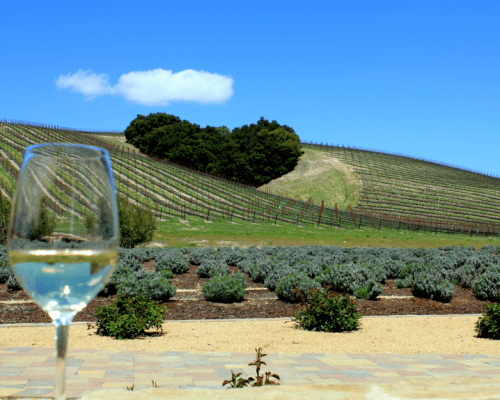 Niner Winery, Paso Robles, CA