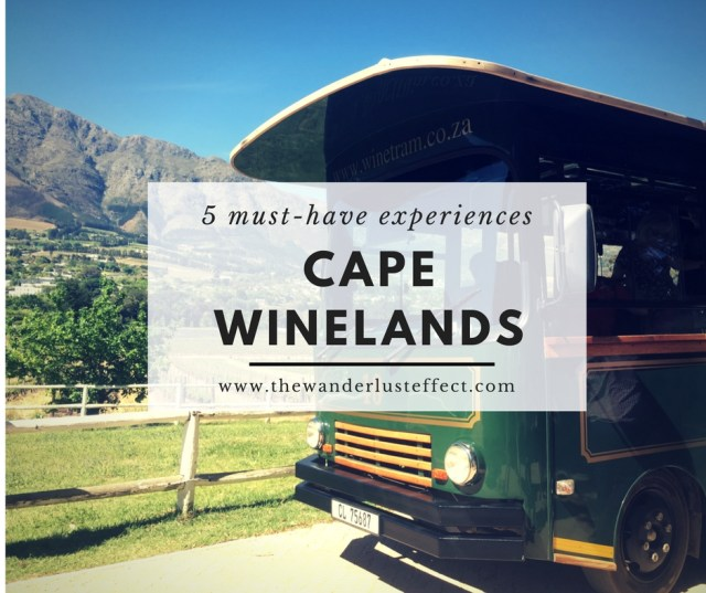 5 Cape Winelands Experiences You Can't Miss - The Wanderlust Effect