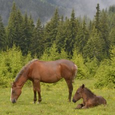 A Horseback Riding Trip in the Carpathians with Green Ukraine
