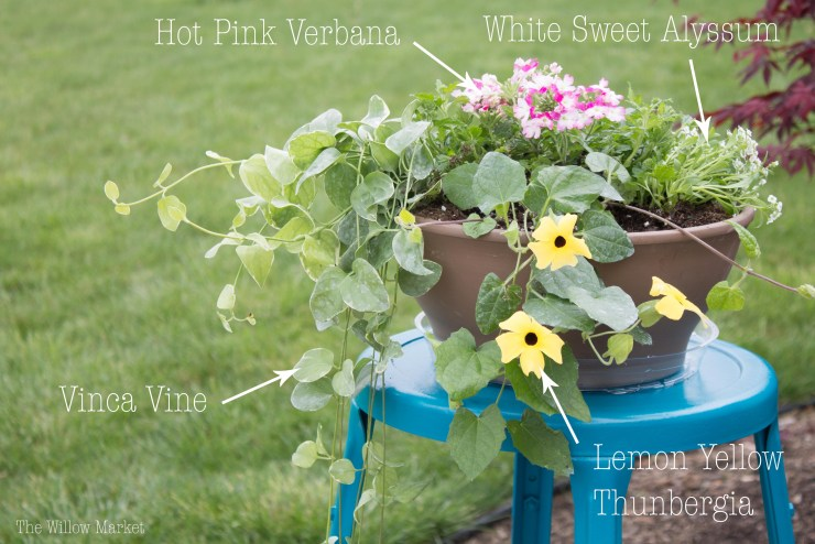 Pink Vertuna, White Sweet Alyssum, Vinca Vine, Lemon Yellow Thunbergia, Spring colored flower variety