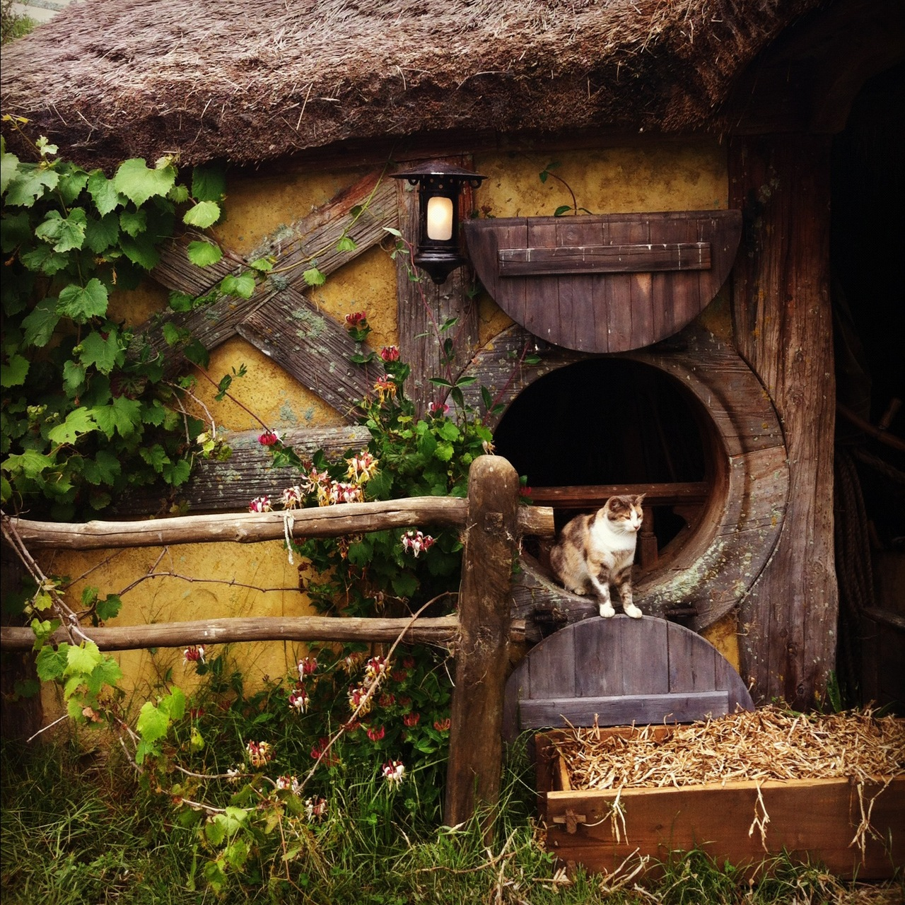 Hobbit House Pictures | The Hobbit Set Photos
