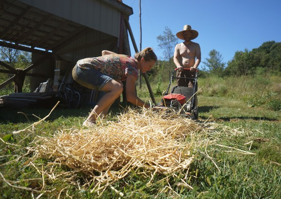 Making Chopped Straw with a Lawnmower