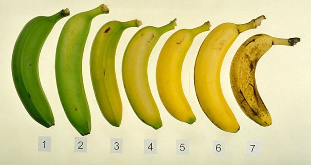 Bananas going from green to ripe