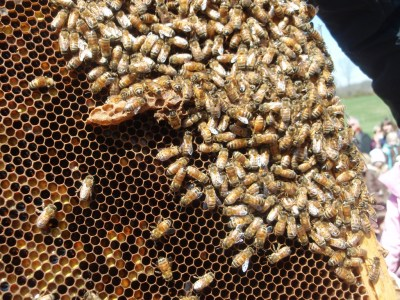 Honeybees - Howell Living History Farm - Things to Do In New Jersey