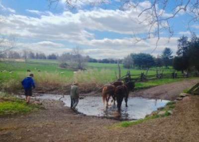 Horses at Howell Living History Farm - Things to Do In New Jersey