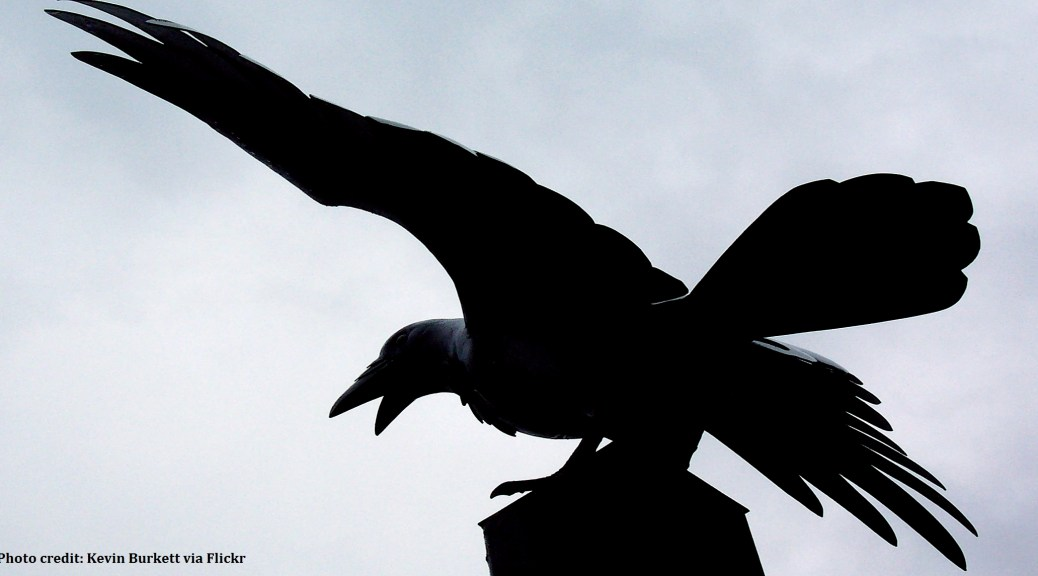 raven credit2