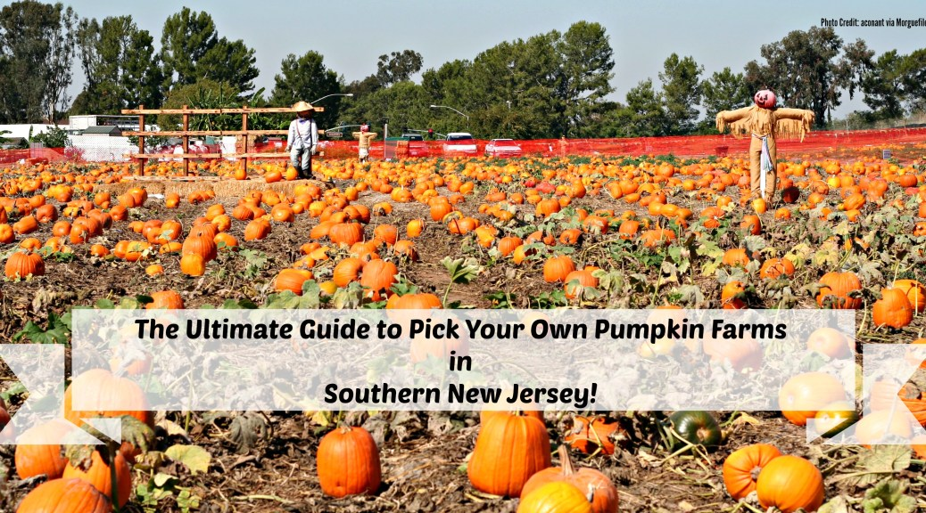 Pumpkin Picking in South Jersey | Things to Do In New Jersey | #nj #newjersey #pumpkinpicking #pickyourownpumpkins #farms #pumpkin #fall #fieldtrips #kids | pick your own pumpkins in south jersey