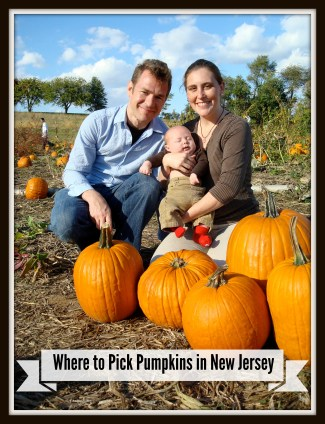 The Ultimate Guide to Pumpkin Picking in New Jersey! | Things To Do In New Jersey | #pumpkinpicking #pickyourownpumpkins #nj #newjersey #farms #fieldtrips #fall #pumpkins | pick your own pumpkin farms in New Jersey