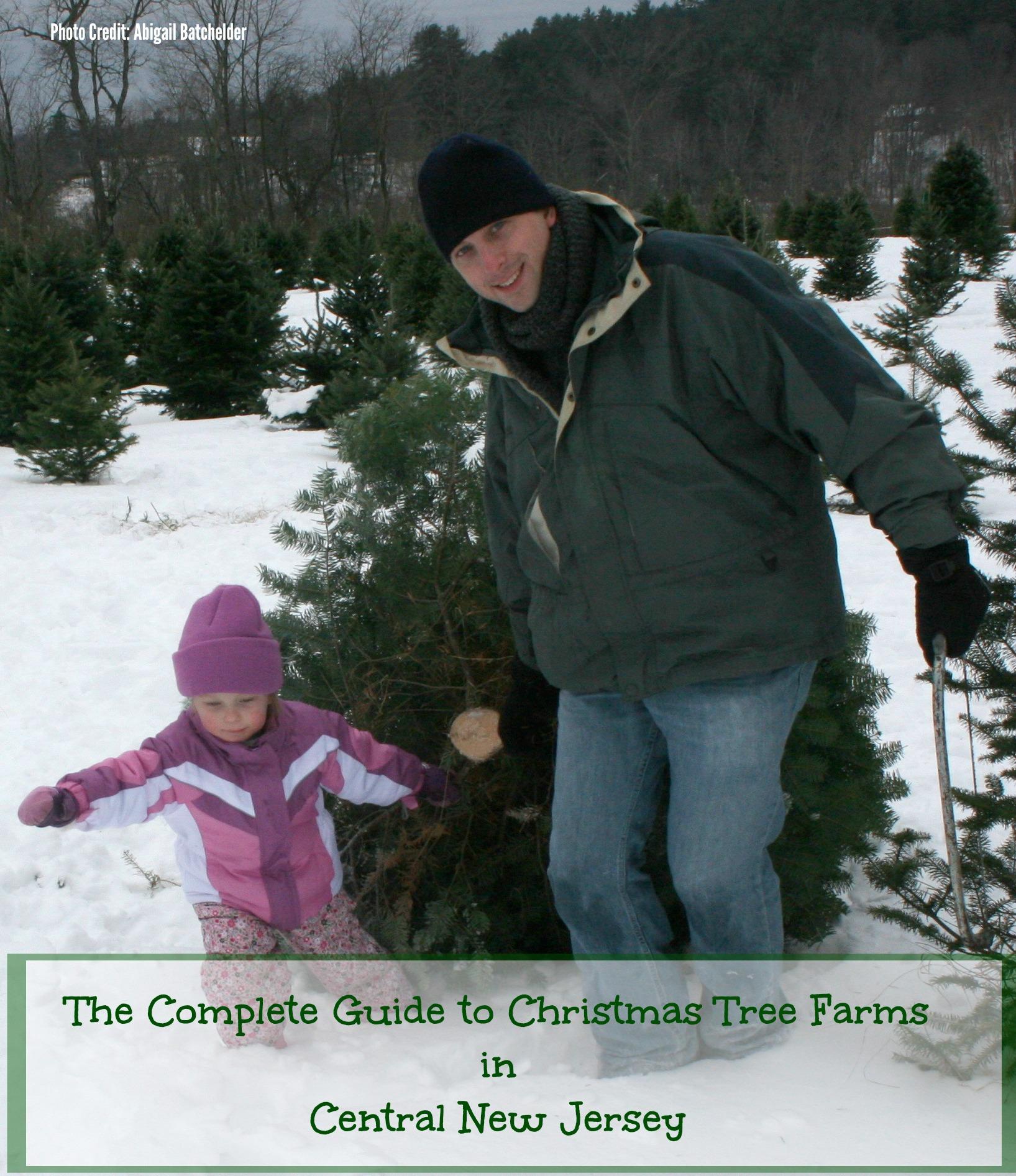 Christmas Tree Farm Central New