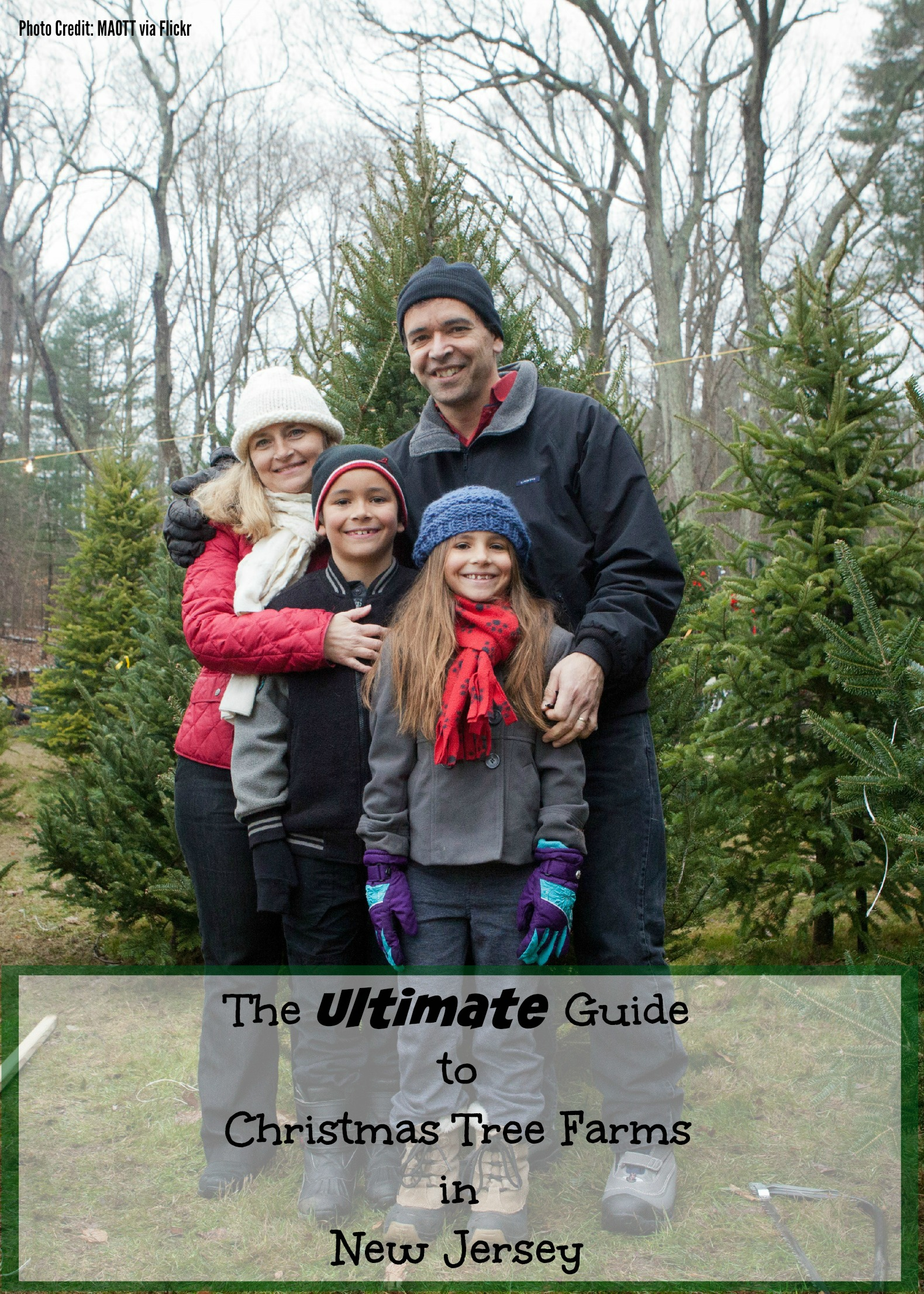 The Ultimate Guide to Christmas Tree Farms in New Jersey - Things to ...