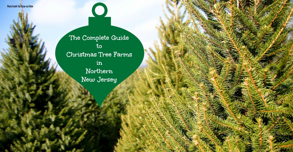 The Complete Guide To Christmas Tree Farms in North Jersey