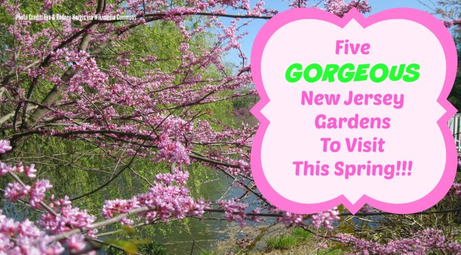 Things To Do In New Jersey – Visit Our Botanical Gardens!