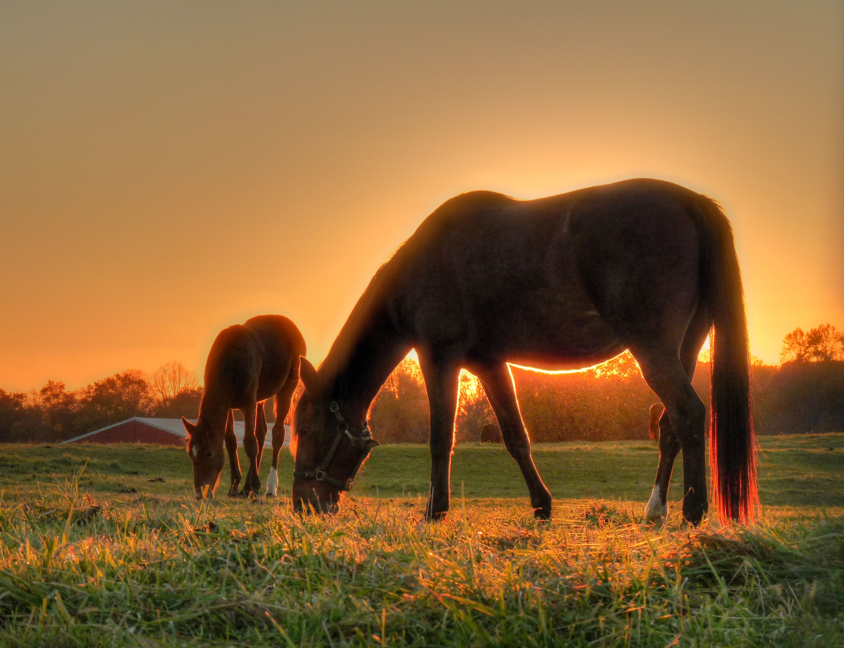 Mother And Son Colts Neck