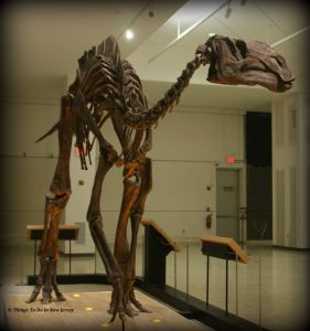 See this Hadrosaurus skeleton and lots more with free admission to the NJ State Museum on Museum Day Live! More than 20 New Jersey museums are participating in this fantastic free event! | find out more at www.thingstodonewjersey.com | #nj #newjersey #trenton #museums #freemmuseums #freeadmission #free #thingstodo #familyfriendly #dinosaurs