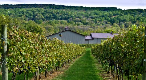 New Jersey is home to more than 40 wineries! | New Jersey wineries | NJ wineries | New Jersey vineyards | NJ vineyards | wineries in New Jersey | wineries in NJ