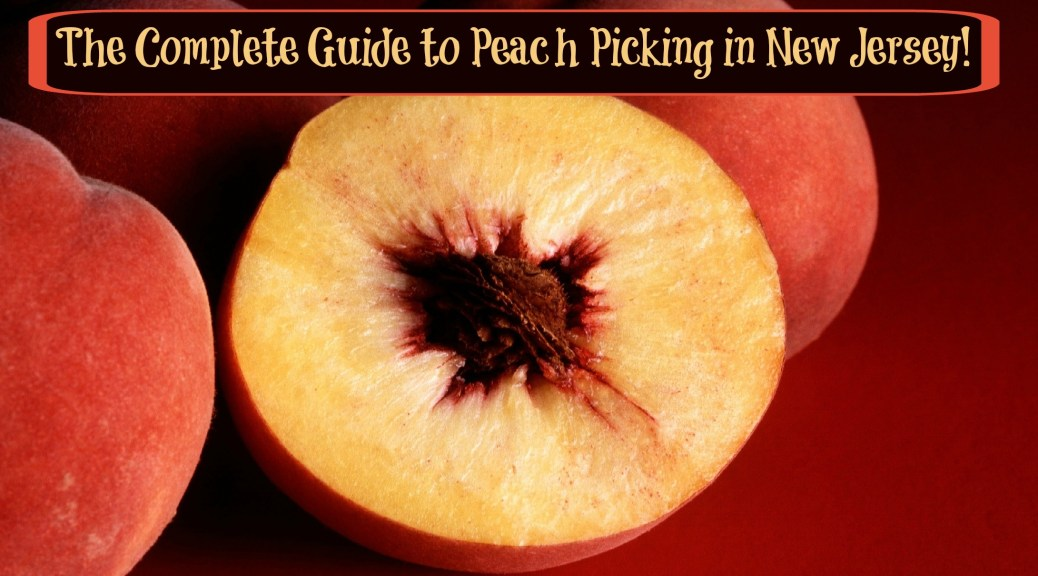 the complete guide to peach picking in new jersey | peach picking in nj | pick your own peaches in nj | pick your own peaches in new jersey | pick your own peach farms in nj | pick your own peach farms in new jersey