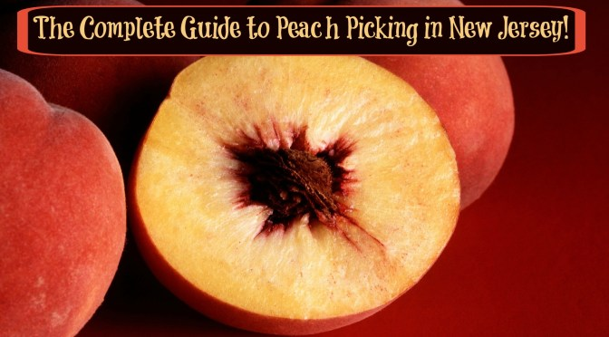 The Complete Guide to Peach Picking in New Jersey!