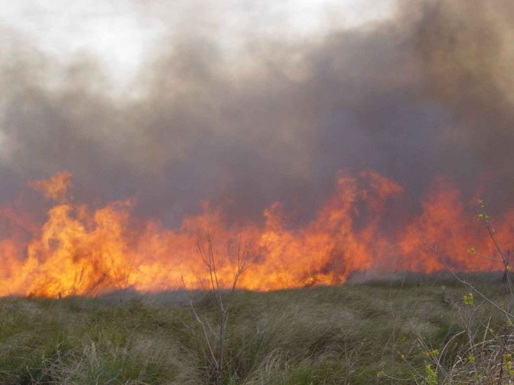a_cypress_prairie_burns_during_a_early_spring_prescribed_fire