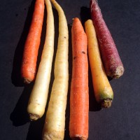 Ingredient of the Month: Rainbow Carrots