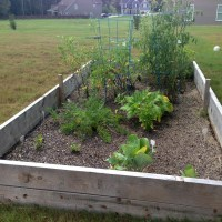 Confessions of a First-Time Gardener