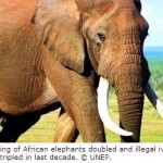 New Report Warns of Uncertain Future for African Elephants