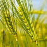 Increasing Homogeneity within Global Food Supply Warns of Risks to Food Security