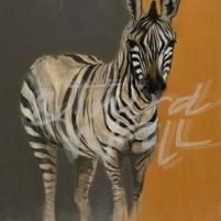 liz jardine, zebra, african art, africa, contemporary animal art