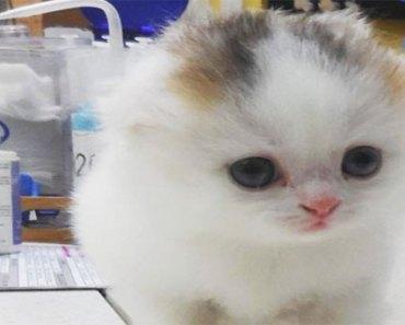 rare-cat
