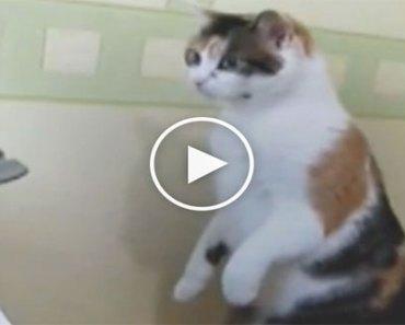 cat-printer