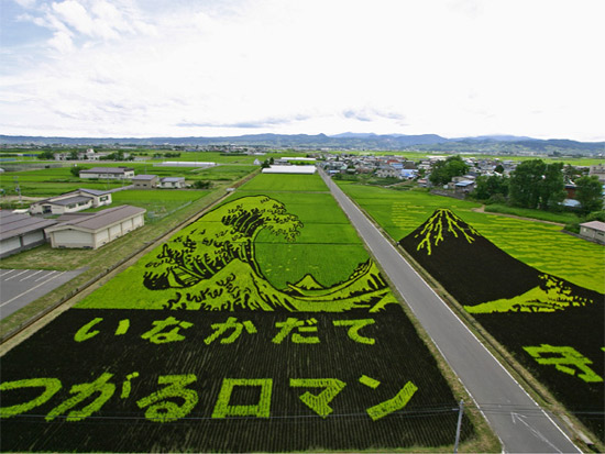 wave-rice-art