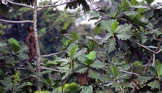 man-on-tree