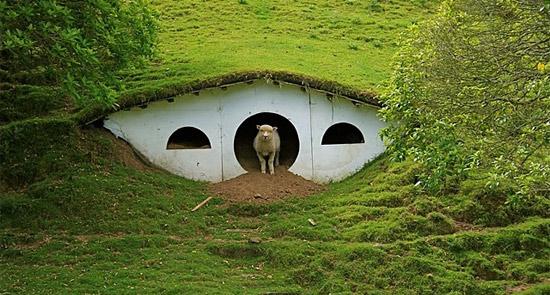lotr-sheep