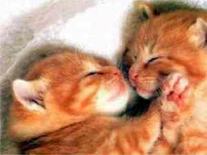 cute_kittens