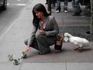 Pickpocket-Duck