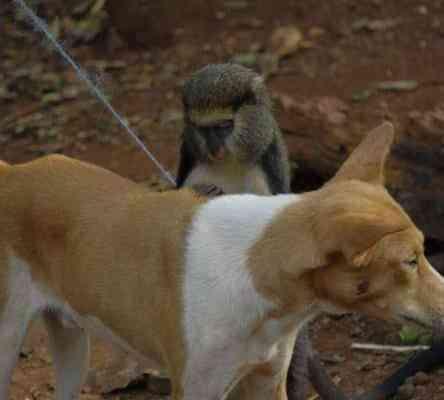 monkeygrooming