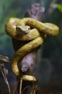 Snake Island2
